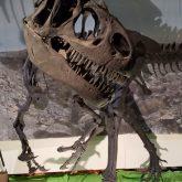 よみがえる地球の覇者!!世界大恐竜展に行ってきました!
