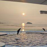 四国水族館へ小さい子ども2人を連れて行ってきました!